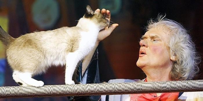 Юрий Куклачев построит в Израиле дворец для кошек за $1 млн