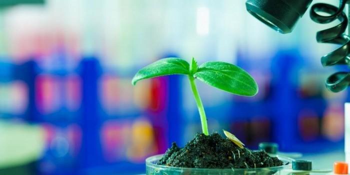 Комиссия РАН по борьбе с лженаукой намерена развенчать миф о вреде ГМО