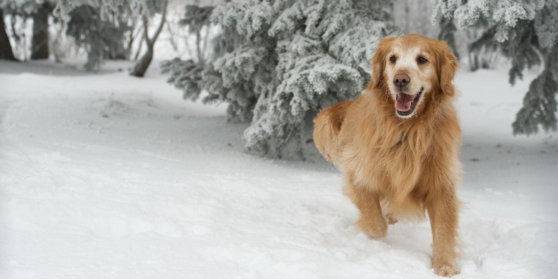 Собака застрелила саратовского охотника