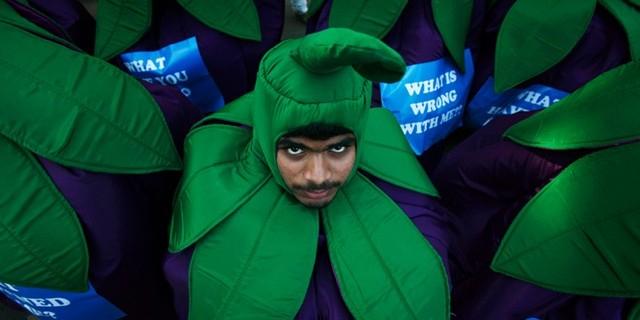 Власти Индии запретили Greenpeace