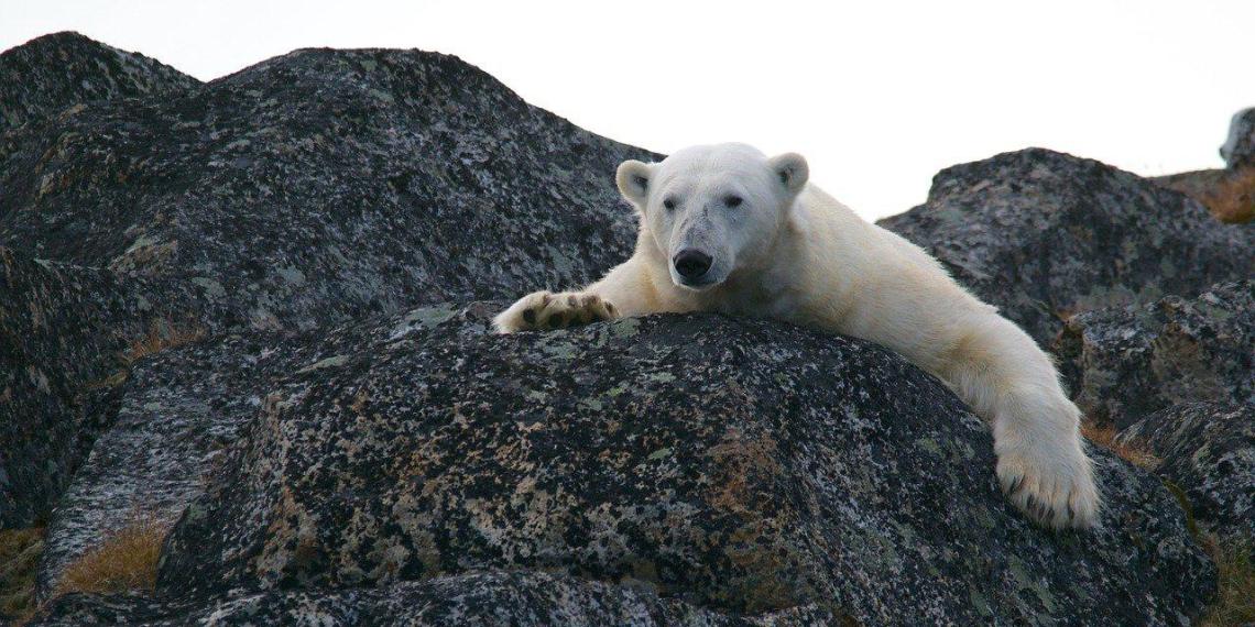 Ученые объяснили, почему в России глобальное потепление идет в два раза быстрее