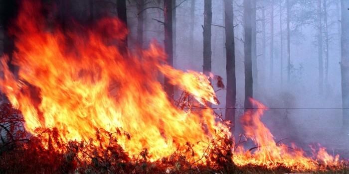 Жителям Кузбасса подарят саженцы за доносы на поджигателей