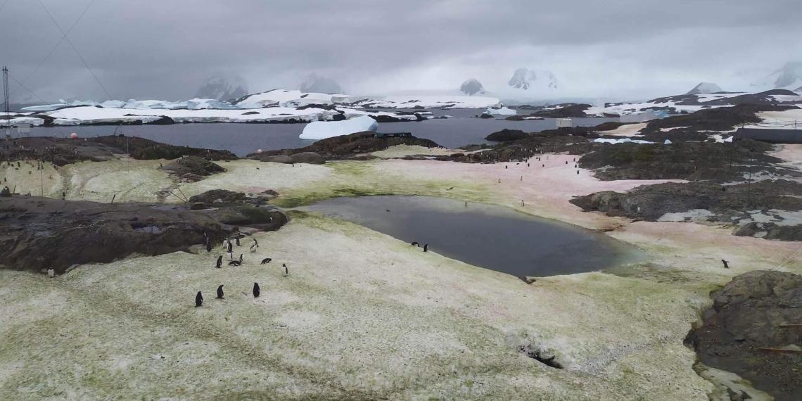 Украина показала зеленый снег в Антарктиде