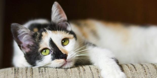 Исследование: агрессивность кошек зависит от их окраса