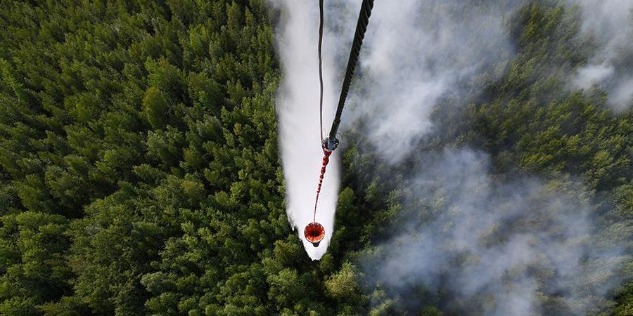 Площадь лесных пожаров в России снова увеличилась