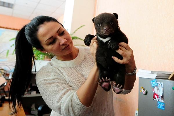 В цирк Владивостока подбросили гималайского медвежонка