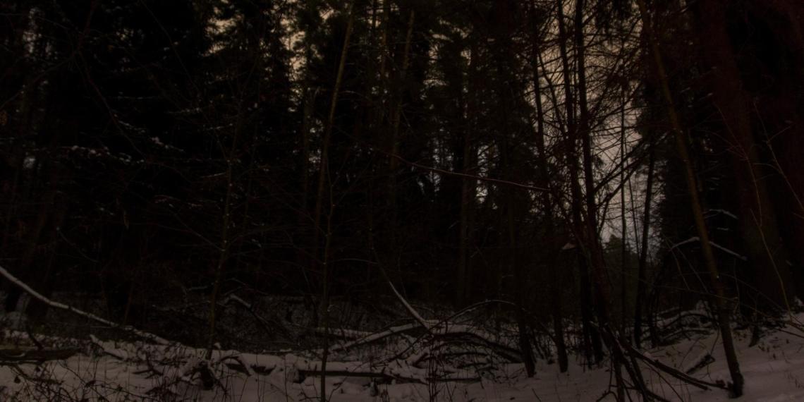В Подмосковье подросток замерз насмерть, распивая алкоголь в лесу