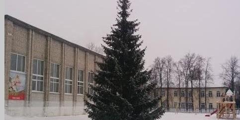 В тюменском селе чиновники спилили новогоднюю елку в палисаднике у старушки