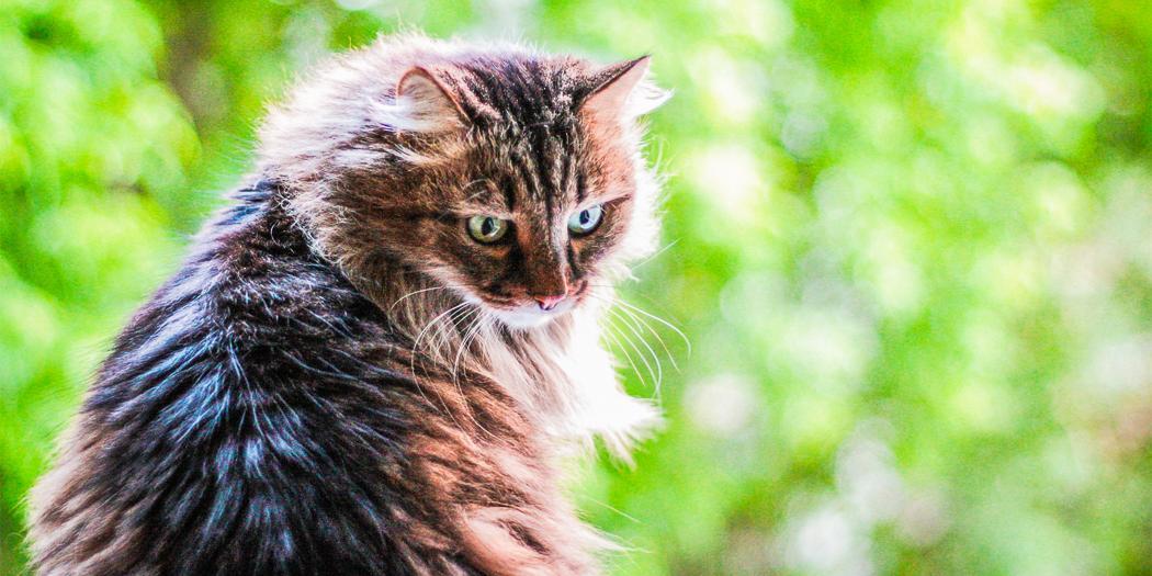 В Гонконге коронавирусом заразился домашний кот
