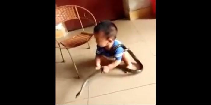 Кошмар любого родителя - маленький китаец играет со змеей