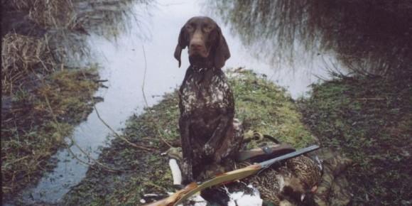 В Одесской области собака подстрелила своего хозяина