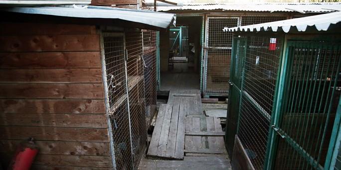 """Экозащитники обнаружили трупы собак в еще одном приюте """"Эко Вешняки"""""""