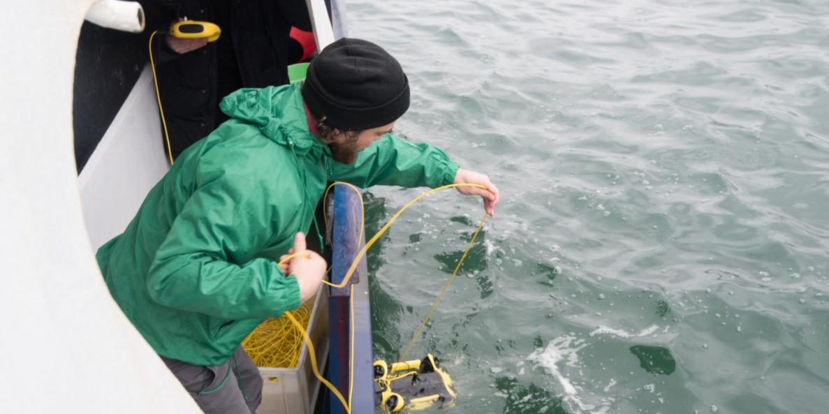 Greenpeace: в Кроноцком заливе на Камчатке аномалий не найдено