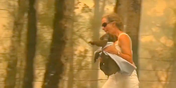 На видео засняли, как смелая австралийка бросилась в огонь ради спасения коалы