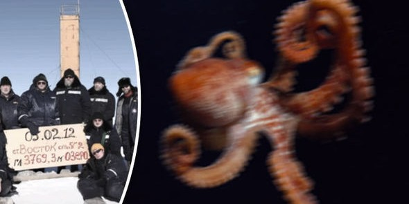 Британские СМИ обвинили Россию в использовании гигантского осьминога-убийцы