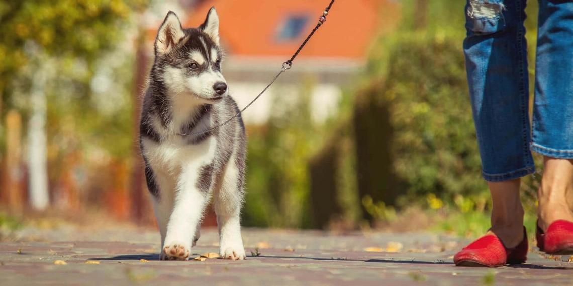 """Собаки оказались с рождения """"запрограммированными"""" на дружбу с человеком"""