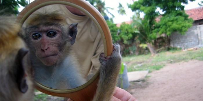 Бурная реакция животных, видящих впервые свое отражение в зеркале (ВИДЕО)