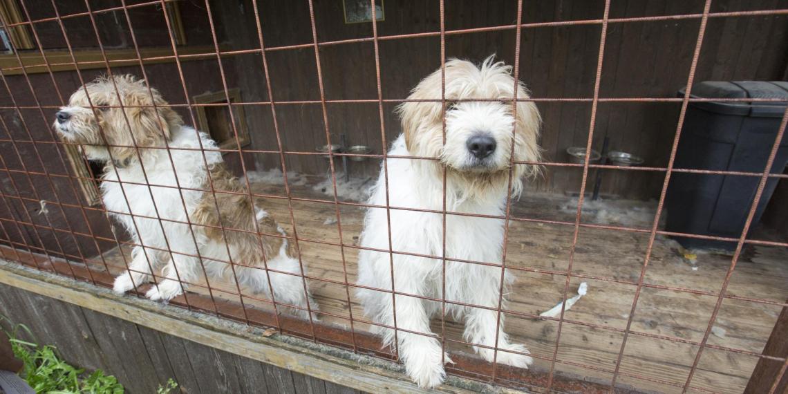 На главного ветеринара Якутска завели дело после убийства 200 кошек и собак