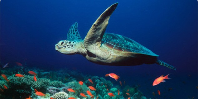 Американку арестовали за катание на морской черепахе
