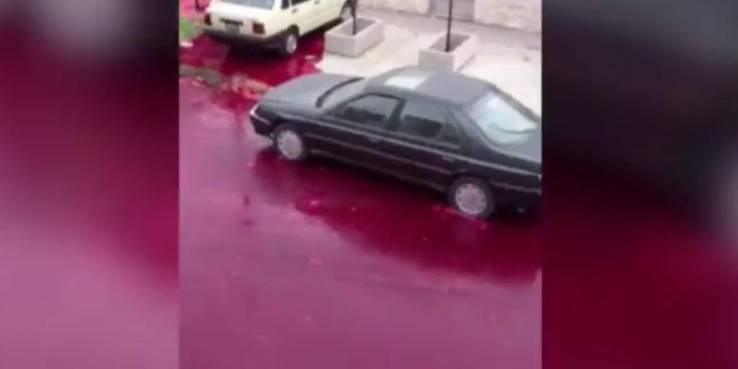 Очевидцы сняли реку крови в Буэнос-Айросе