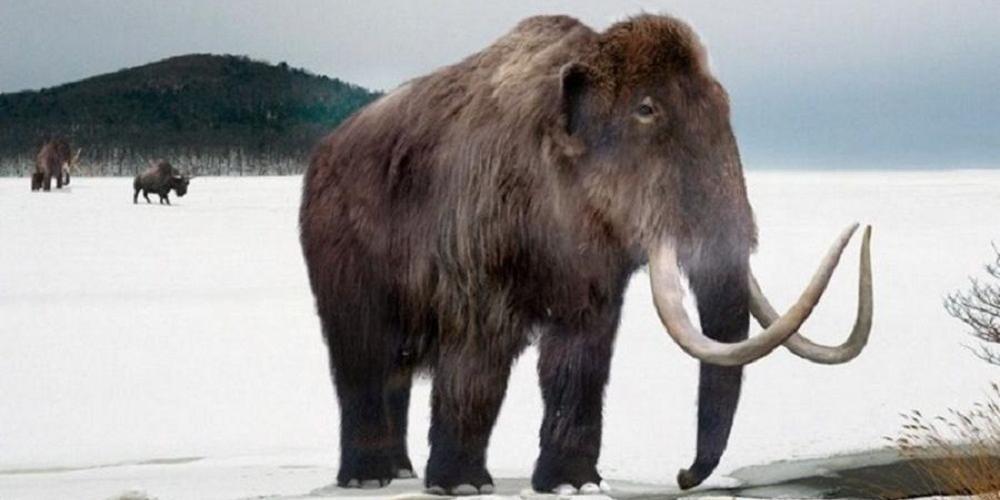 Американские ученые хотят возродить мамонтов и поселить их в Сибири