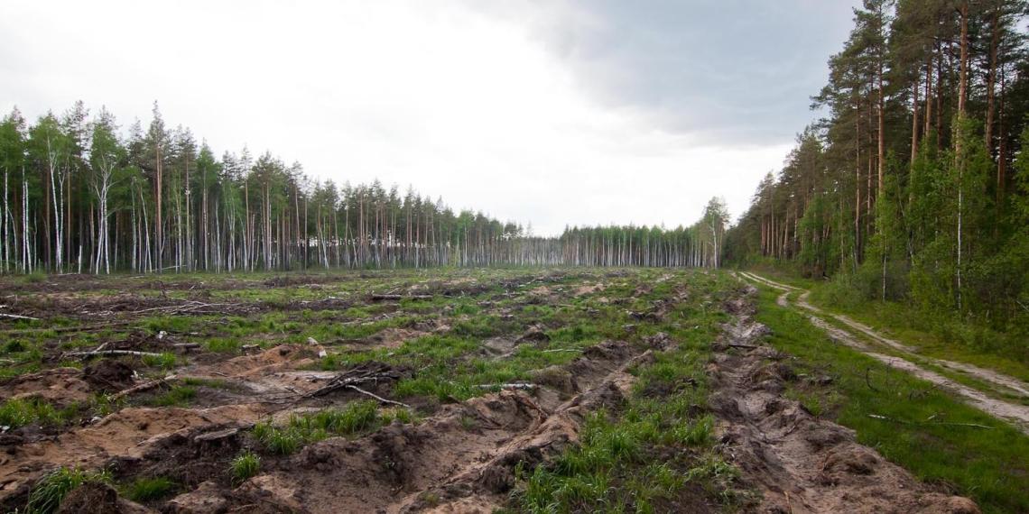 Правительство назвало объемы российского леса, уходящего в Китай