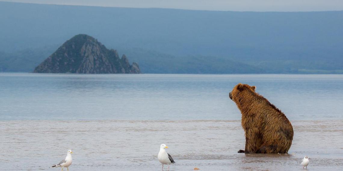 На Камчатке рыбак с трудом выжил в схватке с медведем