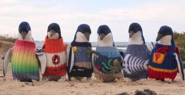 Самый старый житель Австралии уже год вяжет свитера для пингвинов
