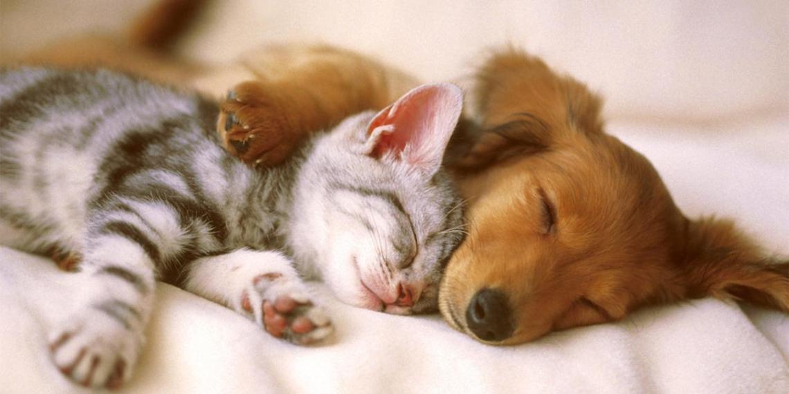 В Госдуме объяснили, зачем планируют ввести обязательную регистрацию животных