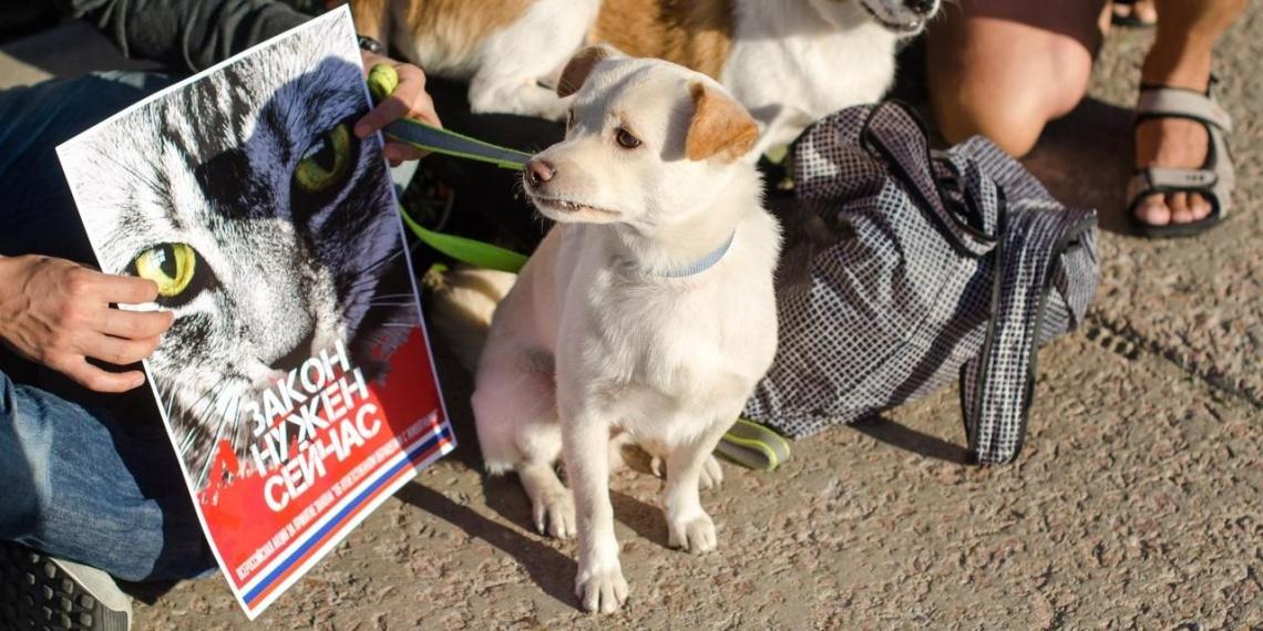 В Омске на митинг в защиту животных собралось около 300 человек