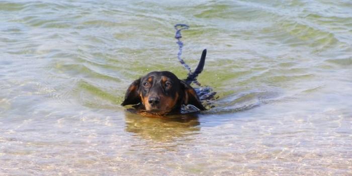 На Кубани туристы потеряли собаку с драгоценностями на миллион рублей
