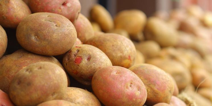 "Дачников накажут за ""неправильную"" картошку"