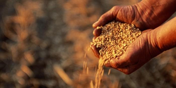Турция подтвердила приостановку закупки российской сельхозпродукции