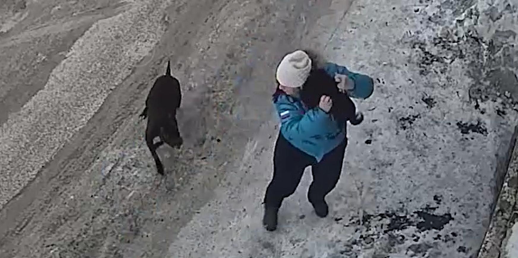 Нападение бойцовского пса на беременную на Камчатке попало на видео