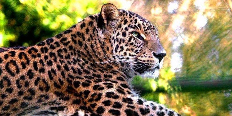 Женщин в леопардовых нарядах будут пускать в Московский зоопарк бесплатно 8 марта