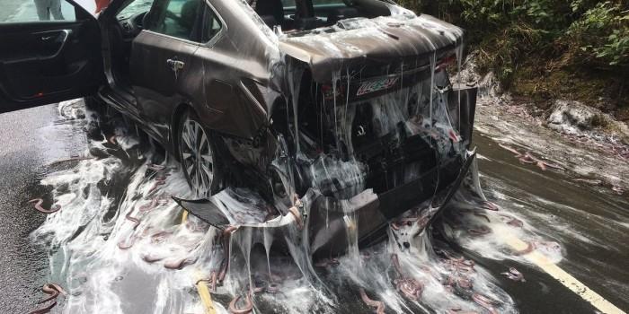 Фото дня: упавший грузовик с угрями и слизью изгадил трассу и две машины