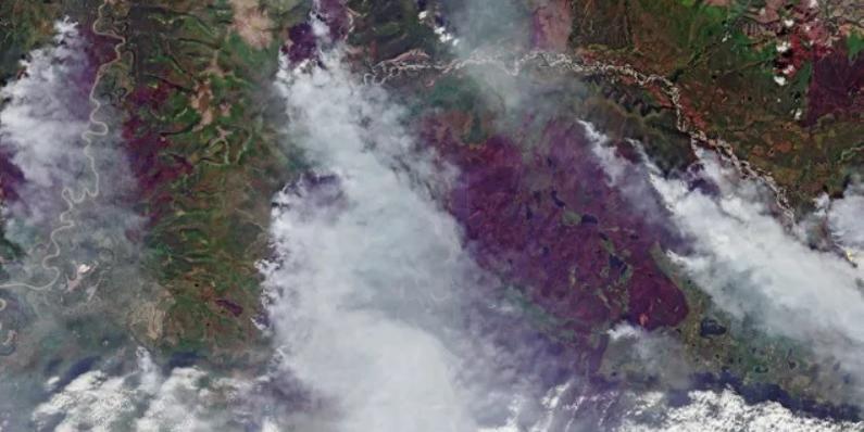 Рослесхоз уличили в занижении данных о лесных пожарах в 57 раз