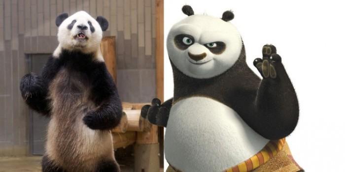 """В Японии обнаружена настоящая """"кунг-фу панда"""""""
