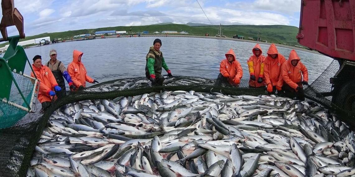 В России повысят ставки за ловлю водных биоресурсов