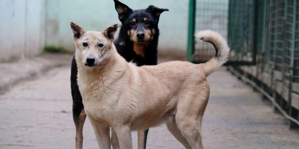 Стая бродячих собак спасла калужанку от изнасилования