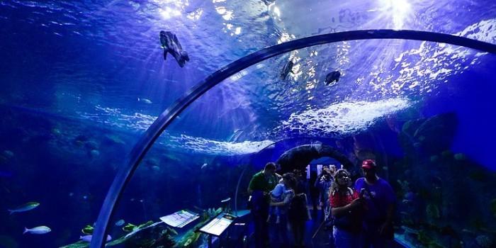 Приморский океанариум обнародует результаты вскрытия погибших животных