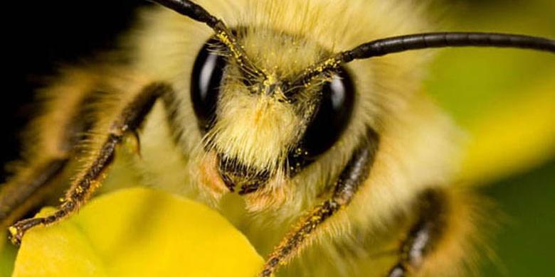 В Китае создают пчелообразный космический аппарат, способный менять свою форму
