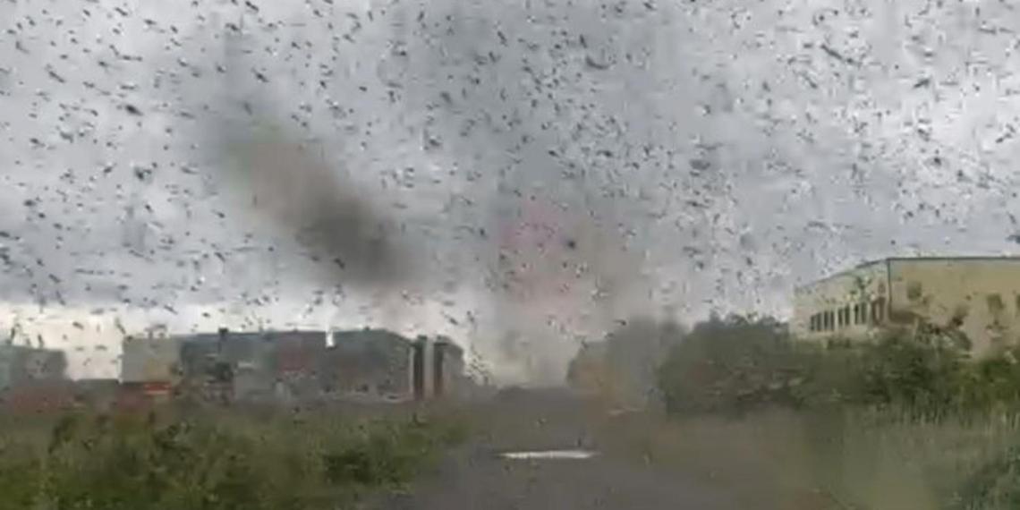 """На Камчатке засняли на видео """"торнадо"""" из комаров"""