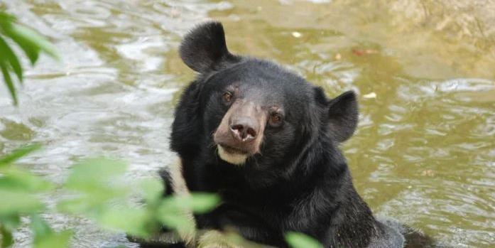 ФСБ предложила считать медведей стратегически важным ресурсом