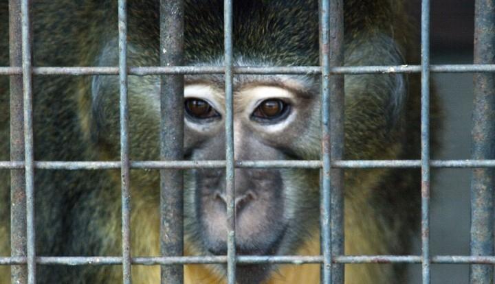 В Крыму обнаружили обезьян-нелегалов с Украины