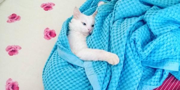 Найден самый красивый кот в мире