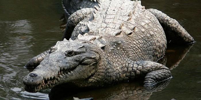 Африканский пастор попытался пройти по воде как Иисус и был съеден крокодилами