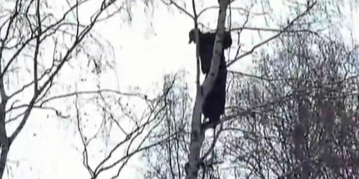В Волгограде пьяница отказался слезать с дерева, потребовав сосиску в тесте и вертолет