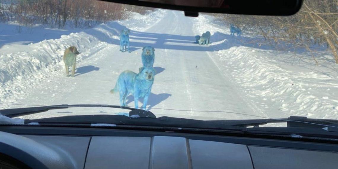 В Дзержинске раскрыли тайну появления в городе голубых собак