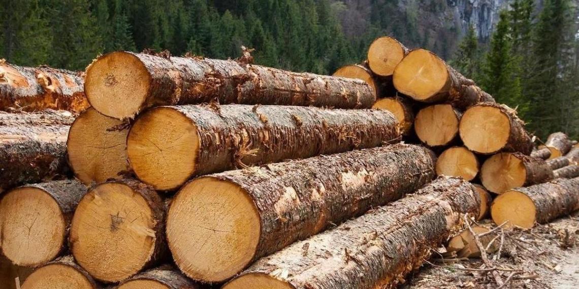 В России появится единая система учета леса